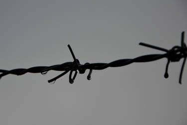 Barbed wire by Wrona-Czarna
