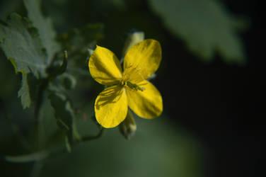 Flower [15]