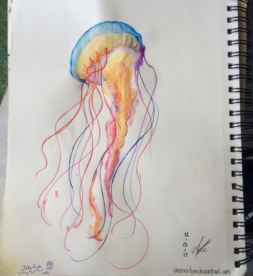 Watercolor Jellyfish by paoescritora on DeviantArt
