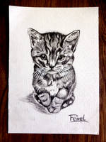 Feivel by Steve-does-art