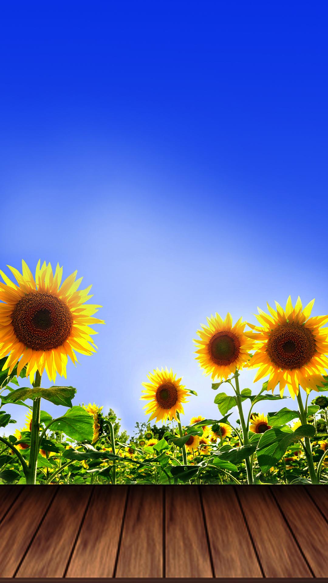 Free Wallpaper Phone: Summer Sunflower Wallpaper iPhone 5 SE