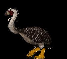 Vorombe: A titan amongst big birds.