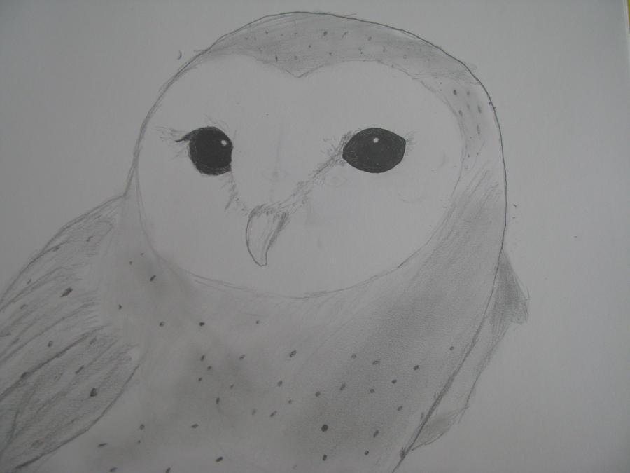 Barn owl by Foxeyes32