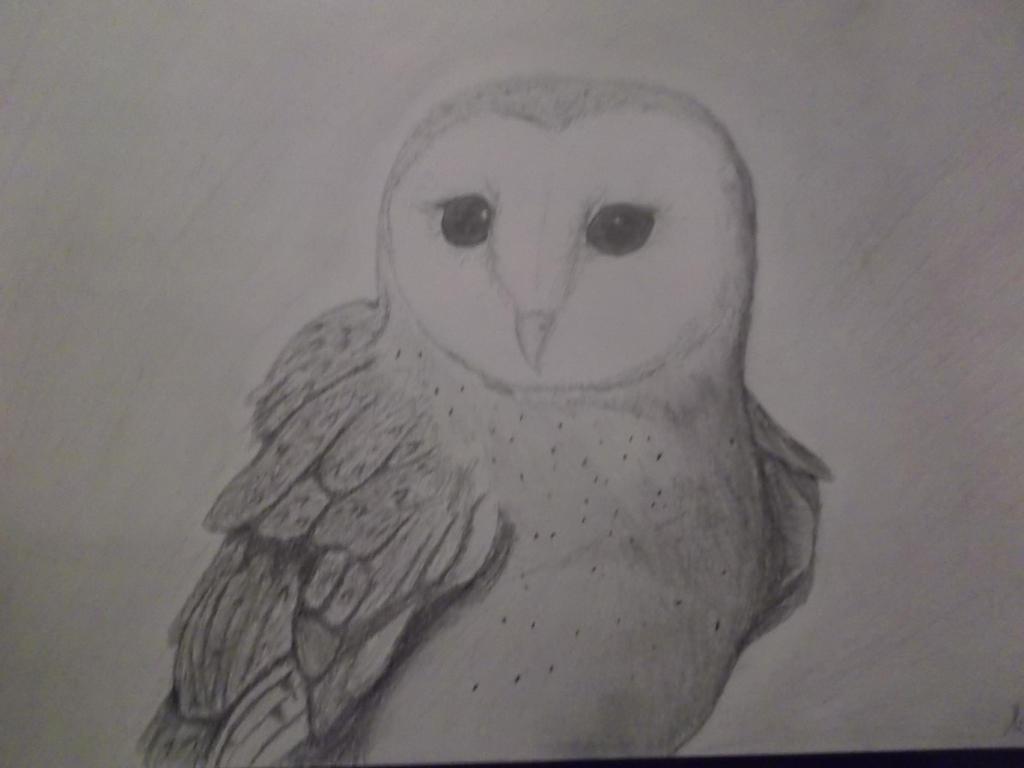 Barn Owl 2 by Foxeyes32