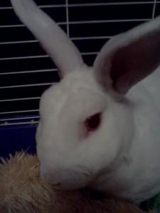 Sonicsugarhog23's Profile Picture