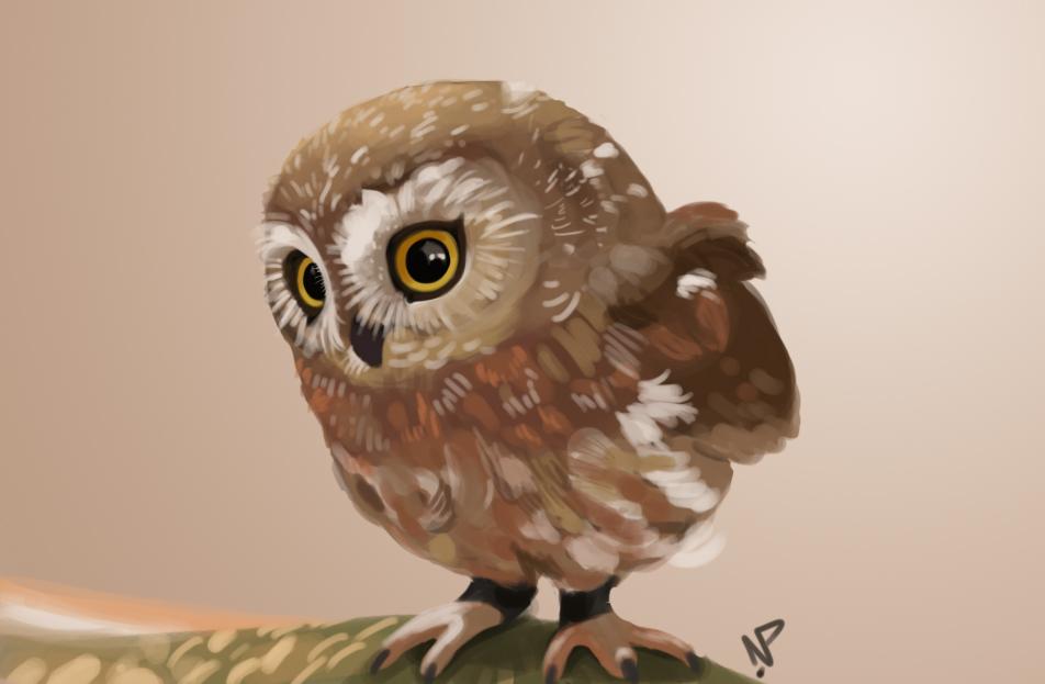 Cute Baby Owl by nikki2290