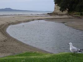 Seagull's Beach by id-24