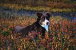 Chino - my dream dog