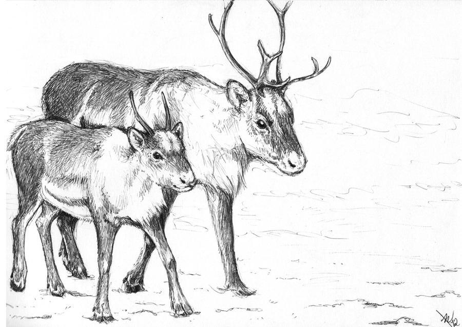 reindeer drawing 2 by brie91 - Reindeer Images 2
