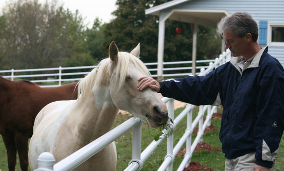 Petting White Horse