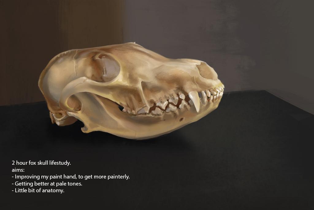 Fox Skull By Suzanne Helmigh On Deviantart