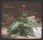 PAD 001 Cirsium Japonicum