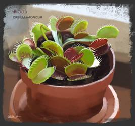 PAD 003 Dionaea muscipula