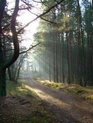 Forest in Poland by thrustumbleine