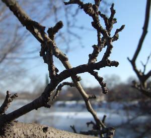 Claw Branch