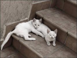 White Cats by Raphaero