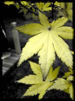 Yellow Leaf by Raphaero