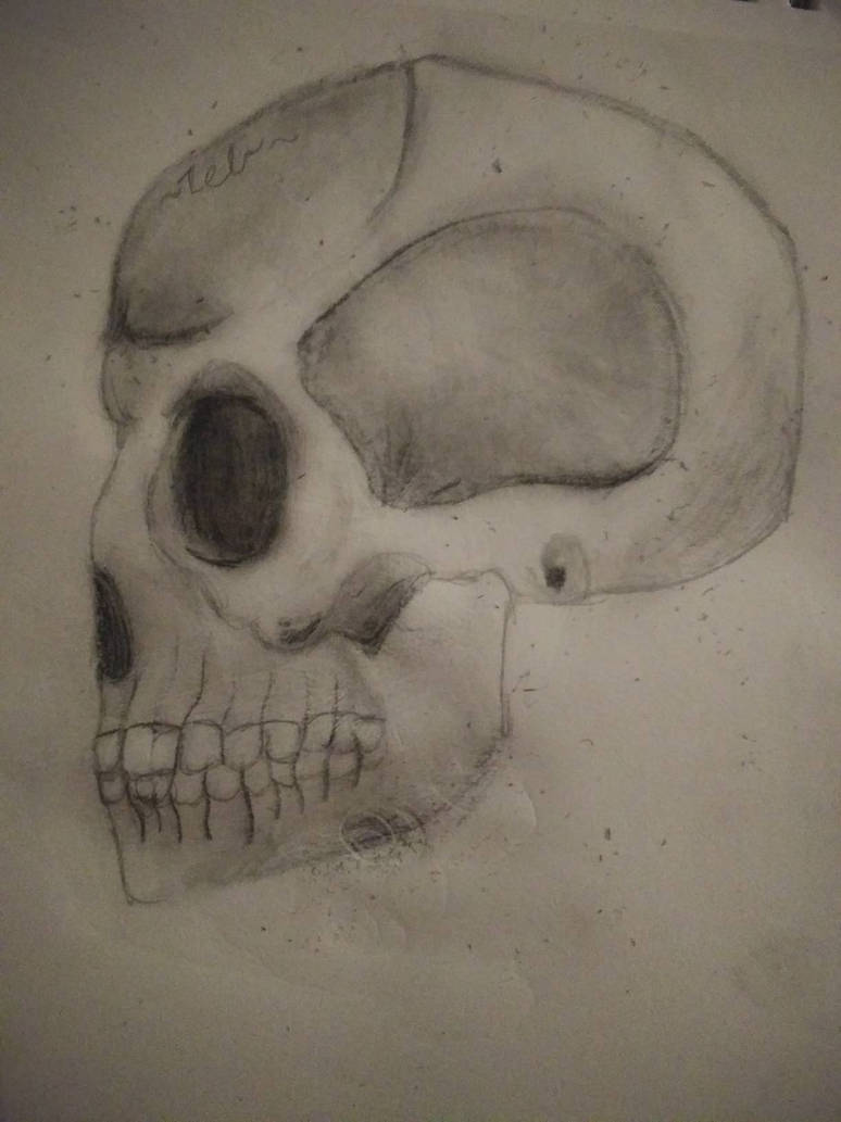 Studying Skulls and Playing with Charcoal by ZebMahana