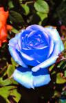 Teresa's Blue.