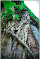 Brick and Vine 2 by LukeShannon