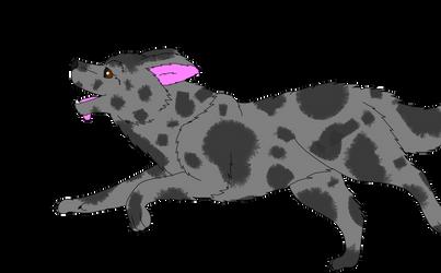 Breedable female Border Collie: Maggie