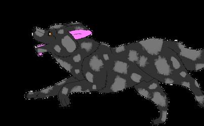 Breedable male Border Collie: Duke