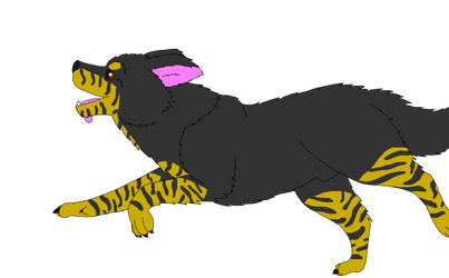 Breedable male Border Collie: Monty