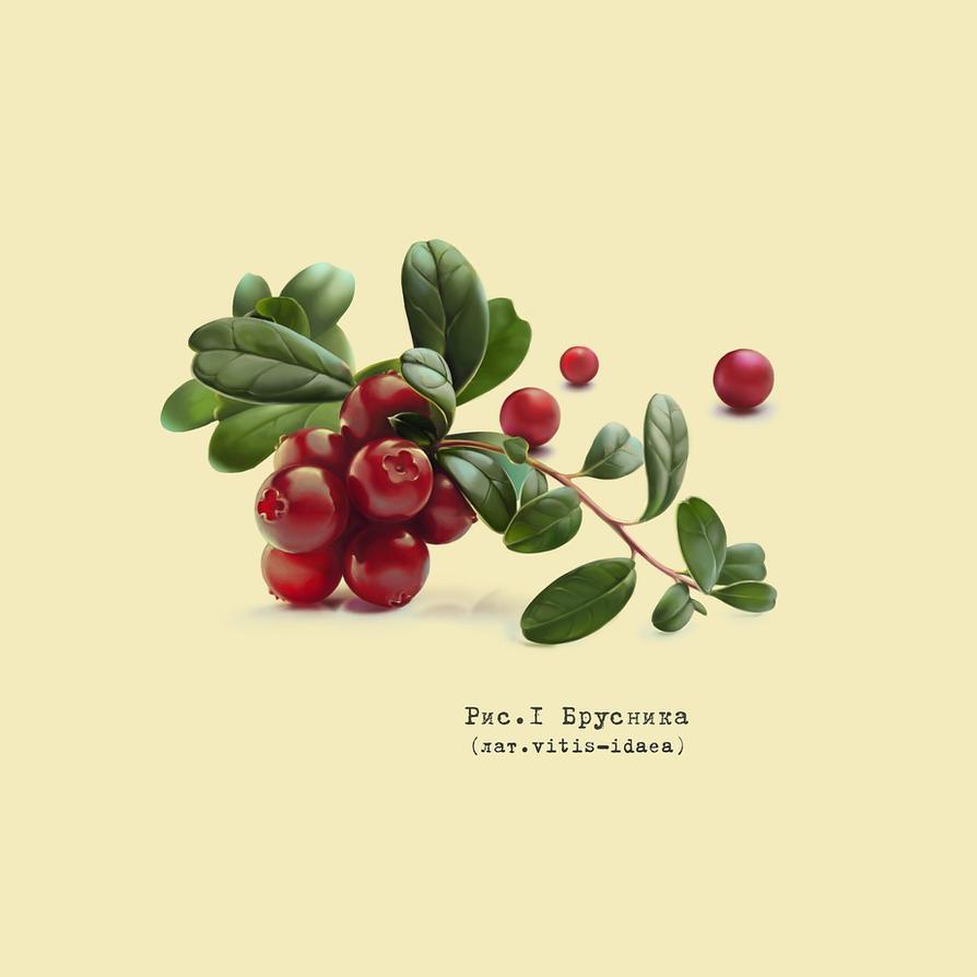 Lingonberry by KseniaHarlequin