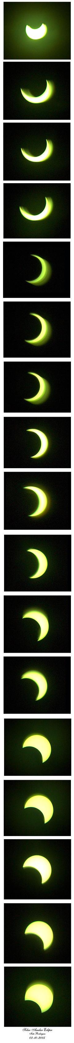 Partial Solar Anular Eclipse by Melanargia