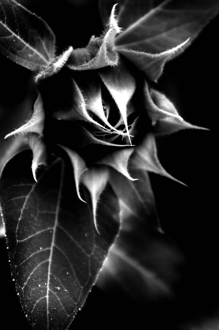 BlackSunFlower by Vilk42