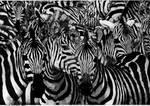 Zebras-pointillism