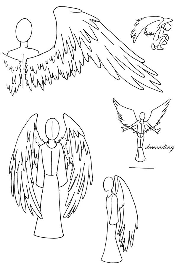 anatomy of angel wings by myst