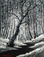 The Forest by SigmaVita