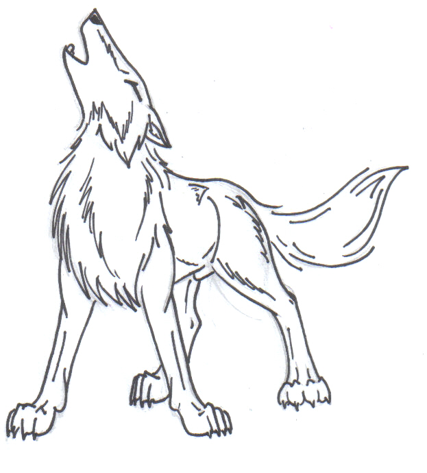 Line Drawing Wolf : Howling wolf lineart