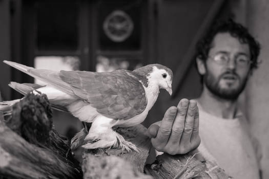 The man who fed the bird