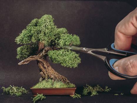 Sculpted bonsai tree