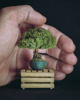 Handmade bonsai tree (with appearing roots) by eVolutionZ