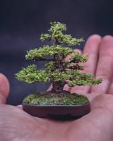 Handmade bonsai (70mm) by eVolutionZ