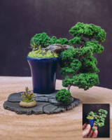Han-kengai style handcrafted bonsai by eVolutionZ
