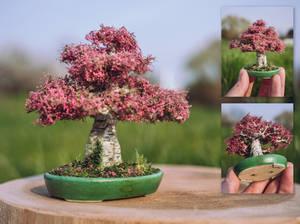 The blossom apricot birch
