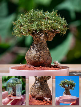 My little baobab (sculpted tree)