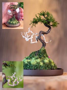 Jin and Bunjingi miniature pine tree