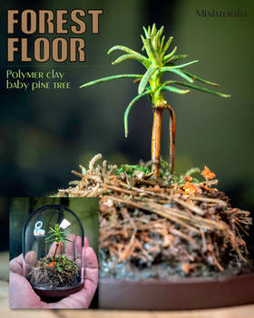 Forest Floor baby pine tree