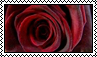 Red rose - stamp 3 by kas7ia