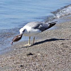A Seagull in Kalamata 3