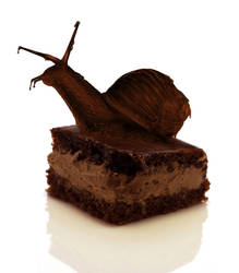 Chocolate Snail Cake