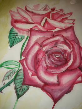 some old rose painting