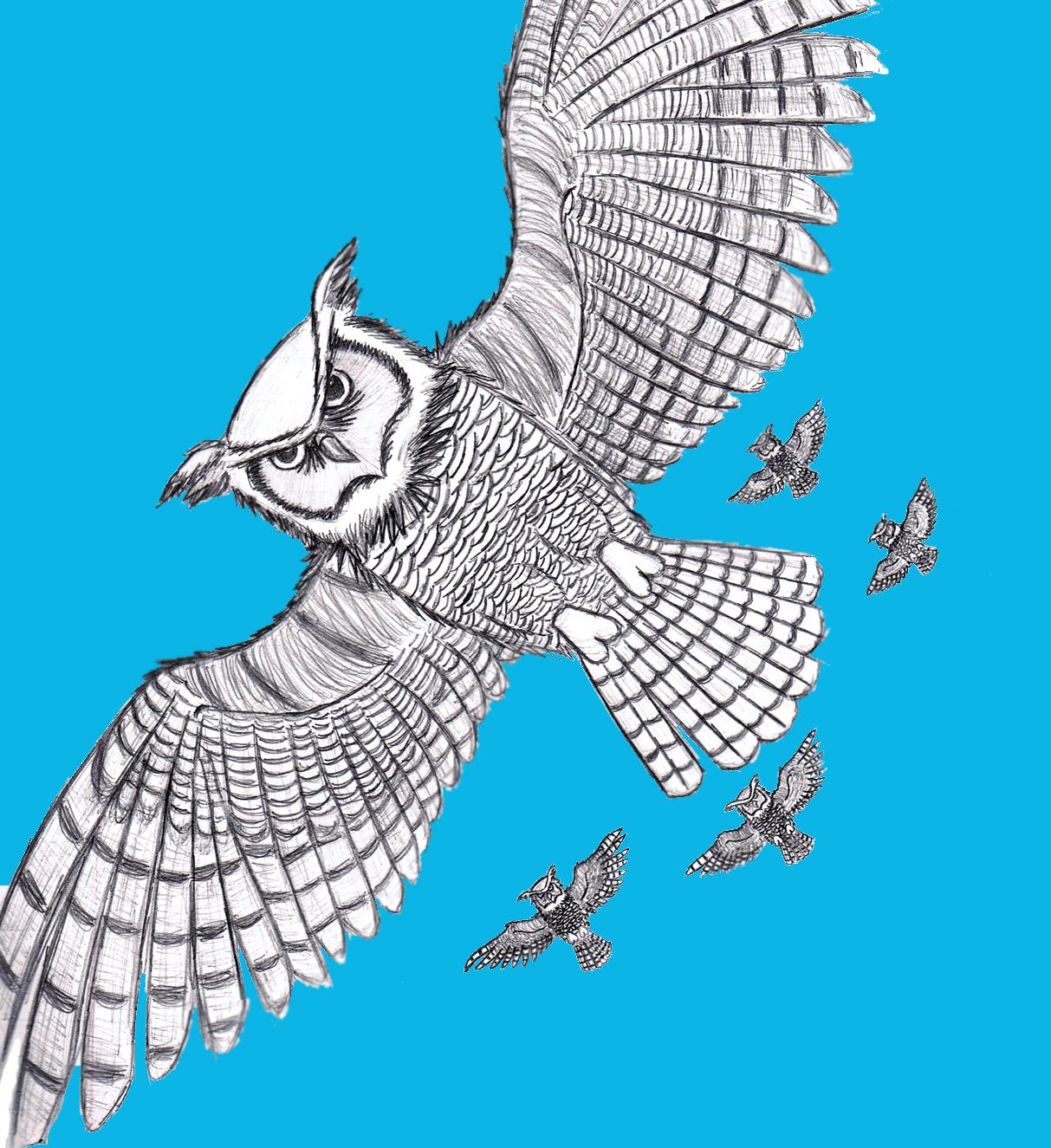great horned owls in flight by shikagemaru on deviantart