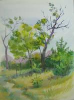 ordinary landscape by yellika