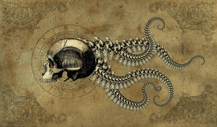 skeleton of the common octoman by ragingcephalopod